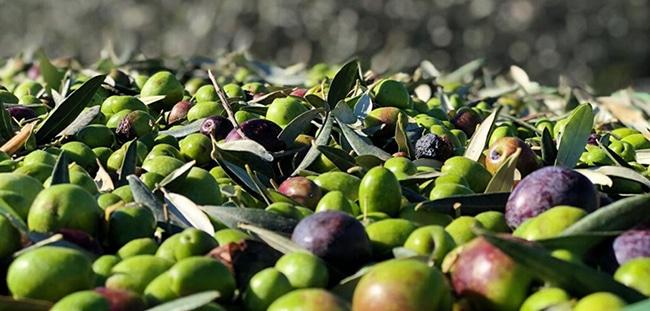 olivas en el suelo
