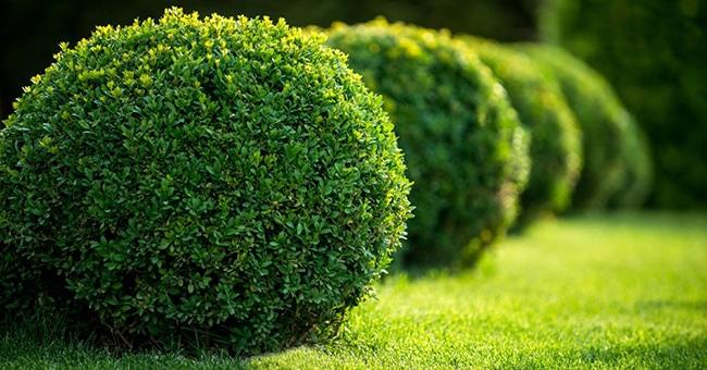 arbustos para el jardin