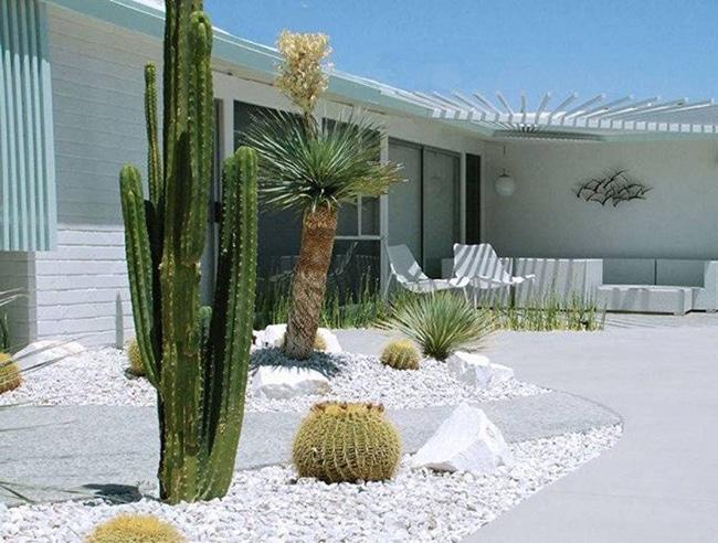 cactus para decorar el jardin