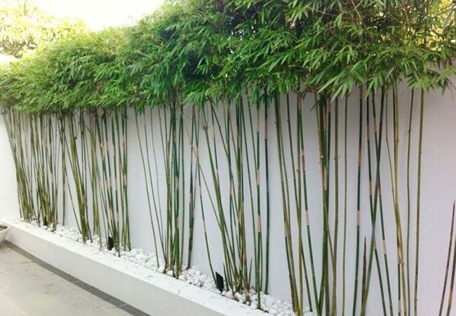 el bambu es una excelente opción para decorar el jardin o terraza.